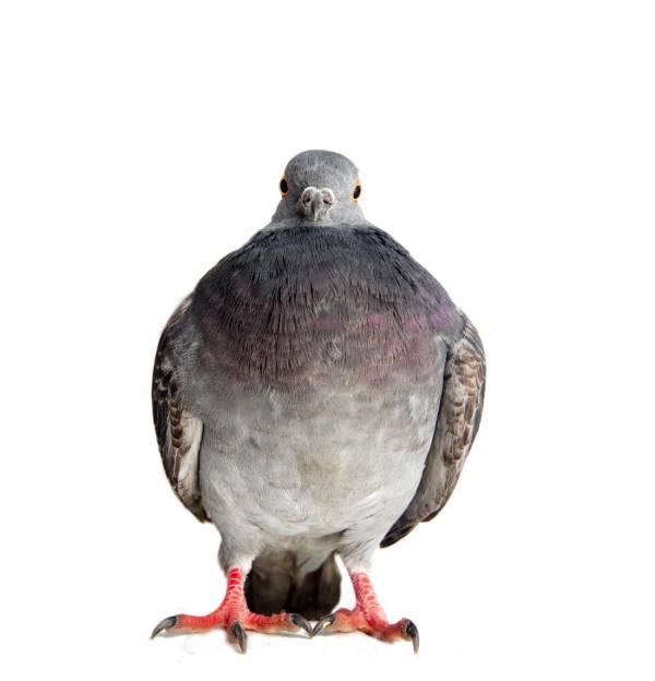 Productos a evitar para ahuyentar palomas