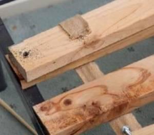 Chinches en estructuras de cama de madera