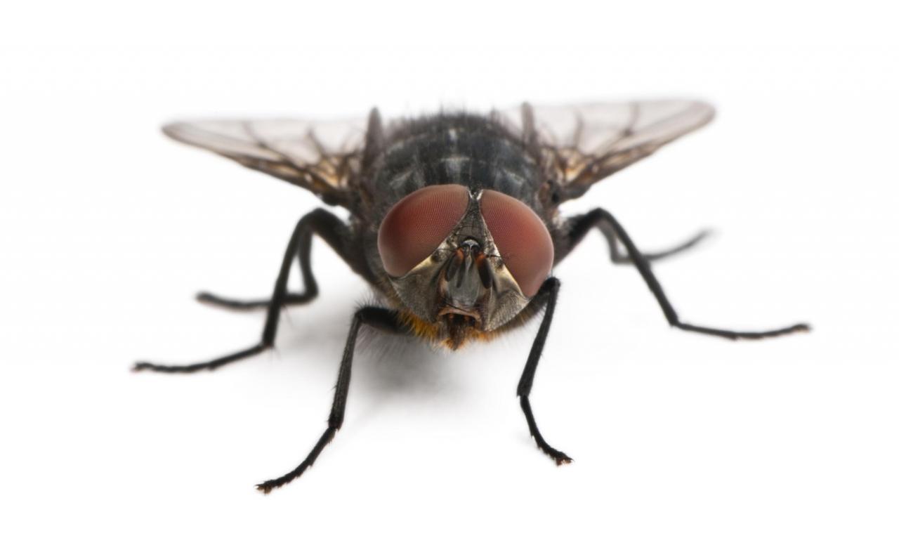 Exterminar plaga moscas