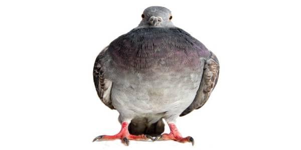 Tratamiento contra Aves