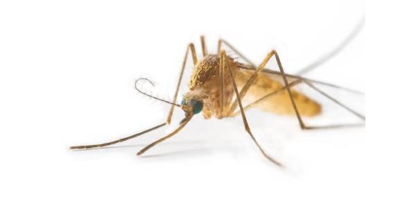 Tratamiento contra Insectos Voladores