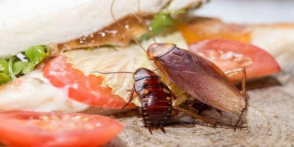 Control de plagas Restauración / Alimentación